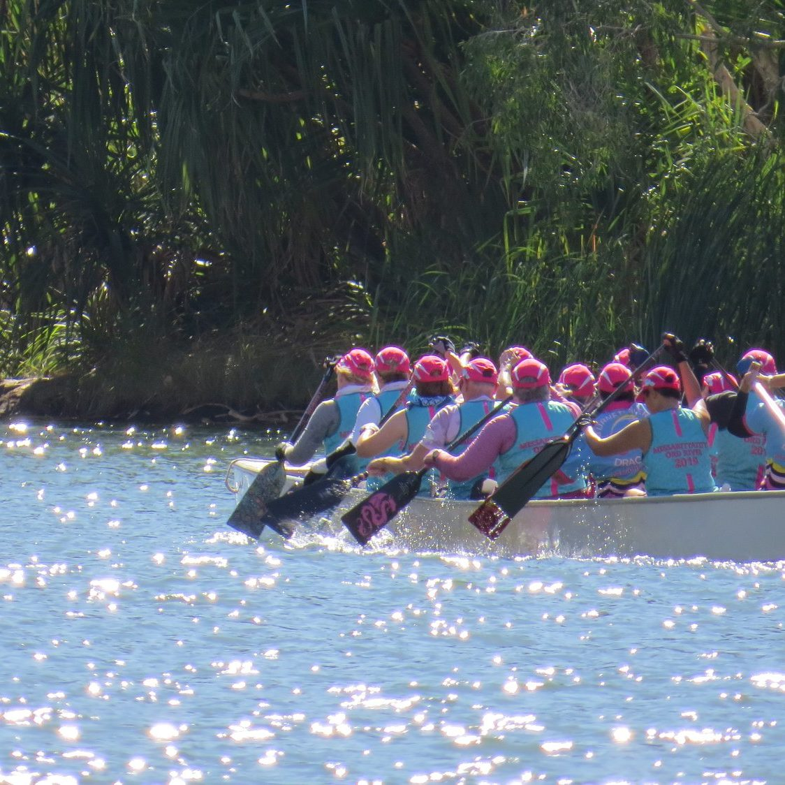 brisbane-breast-cancer-survivor-dragon-boat-team-ord-paddle-2019